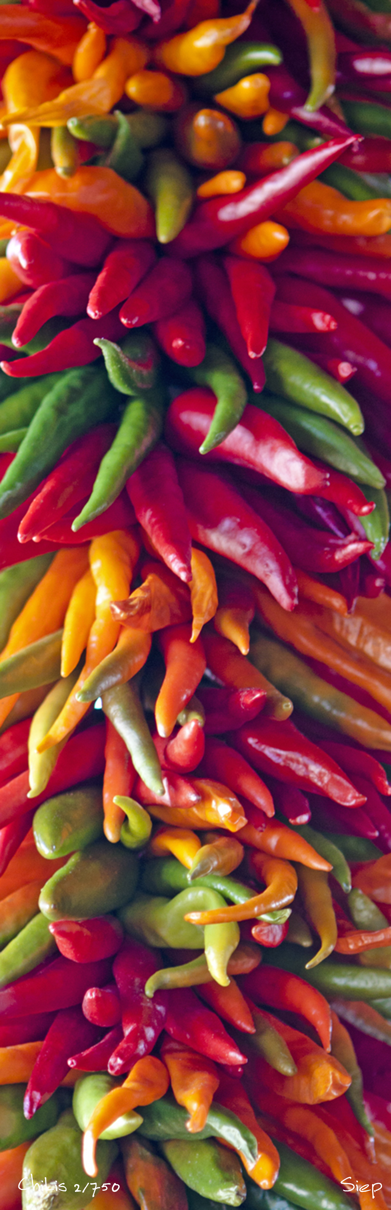 multi colored chilis
